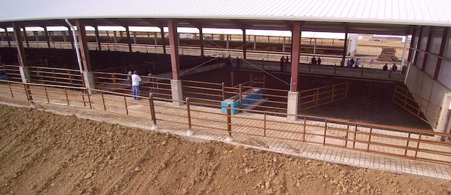 Settje Agri-Services completed the Foltz cattle barn design in 2017, serving as a turnkey provider for permitting, engineering, construction, and compliance needs of the client